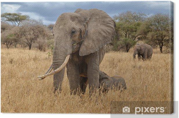 Tableau sur toile Elephant soins infirmiers - Thèmes
