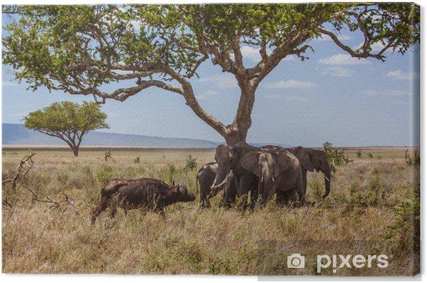 Tableau sur toile Éléphants du paysage africains sont protégés contre les buffles - Thèmes