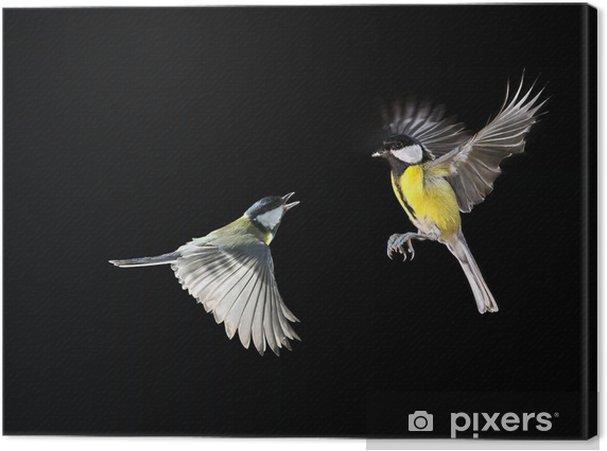 Tableau sur toile En haut - Oiseaux