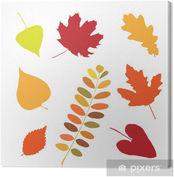 Tableau sur toile Ensemble de différentes feuilles d'automne - Plantes