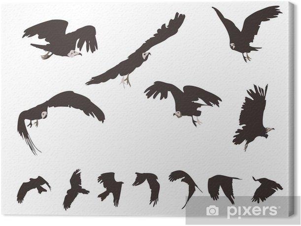 Tableau sur toile Ensemble de Milan noir (Milvus migrans) en vol - Oiseaux