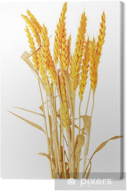 Tableau sur toile Épis de blé Ilie. Isolé sur fond blanc - Graines