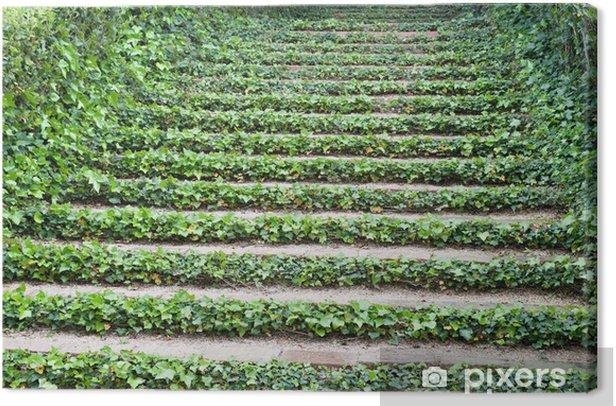 Tableau sur toile Escaliers avec le lierre - Propriétés privées