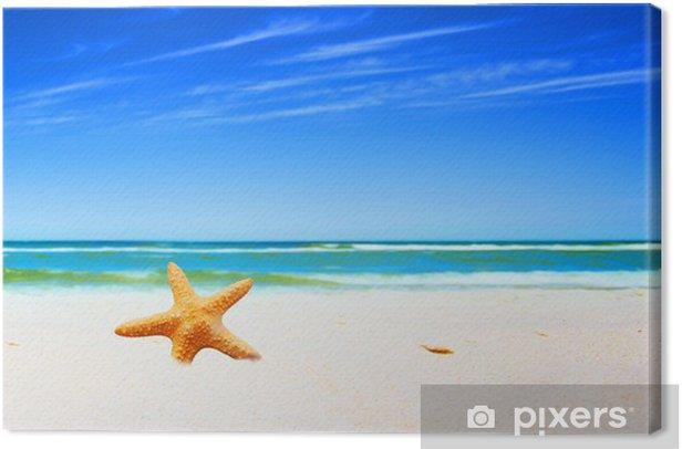 Tableau sur toile Étoiles de mer sur une plage - Vacances