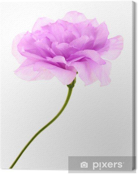 Tableau sur toile Eustoma artificielle pourpre isolé sur blanc - Fleurs