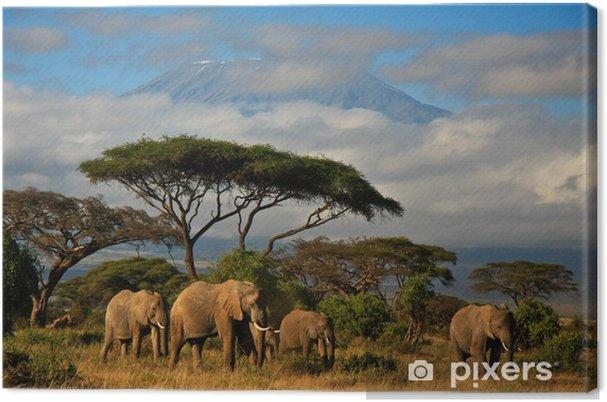Tableau sur toile Famille d'éléphants en face du mont. Kilimandjaro - Éléphants