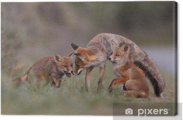 Tableau sur toile Famille de renard rouge - Mammifères