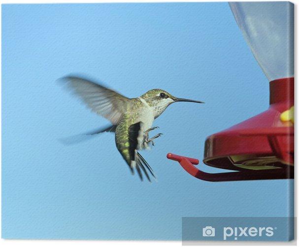 Tableau sur toile Femme gorge rubis Colibri atterrissage sur un chargeur rouge - Oiseaux