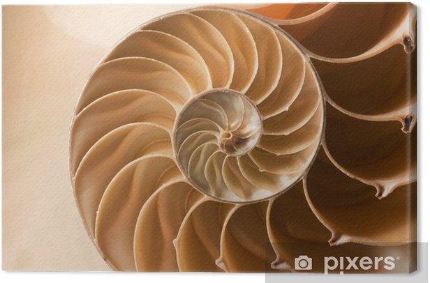 Tableau sur toile Fermer nautile, coquille modèle - Animaux marins