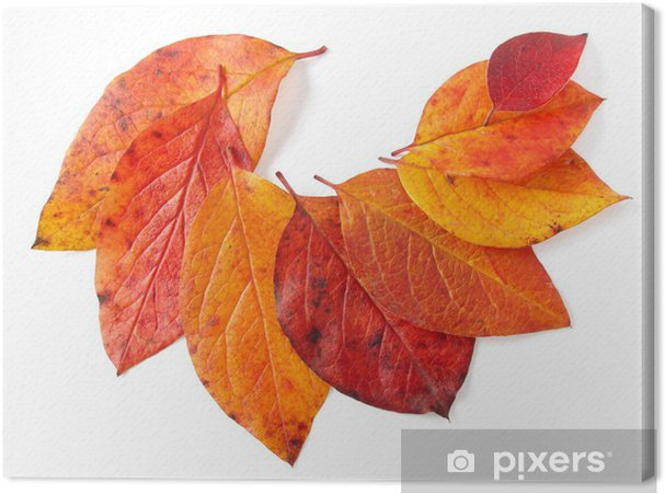 Tableau sur toile Feuilles d'automne - Saisons