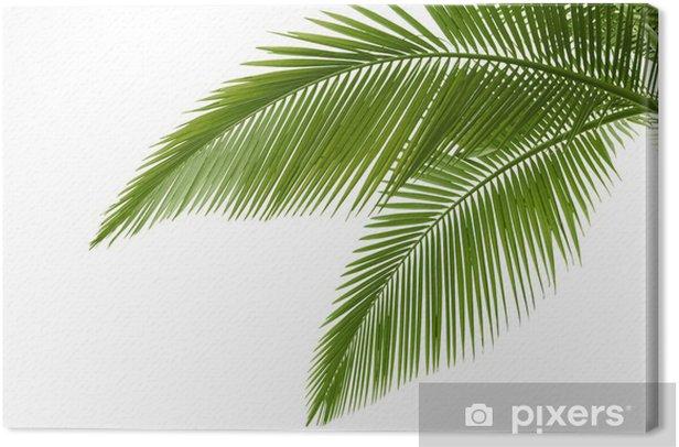 Tableau sur toile Feuilles palme - Arbres et feuilles