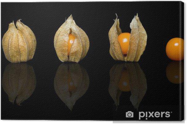 Tableau sur toile Fisalis - Plantes