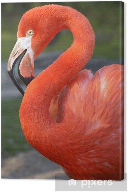 Tableau sur toile Flamant - Oiseaux