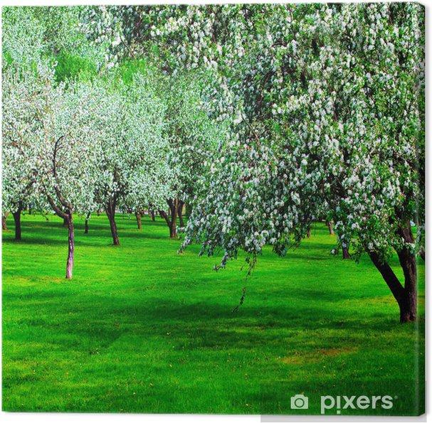 Tableau sur toile Fleur blanche de pommiers au printemps - Saisons