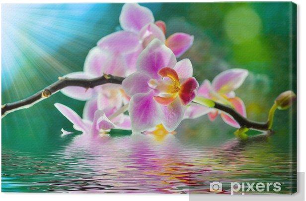 Tableau sur toile Fleur d orchidee - Thèmes