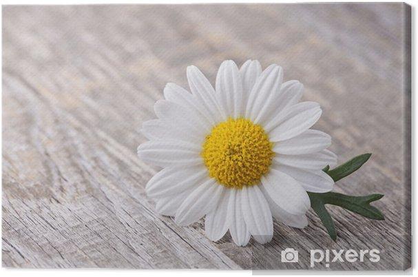 Tableau camomille 2 tableaux sur toile fleur de camomille