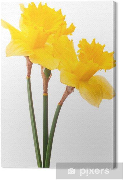 Tableau Sur Toile Fleur De Jonquille Ou Narcisse Bouquet Isole Sur