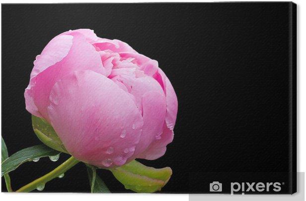Tableau sur toile Fleur de pivoine - Fleurs