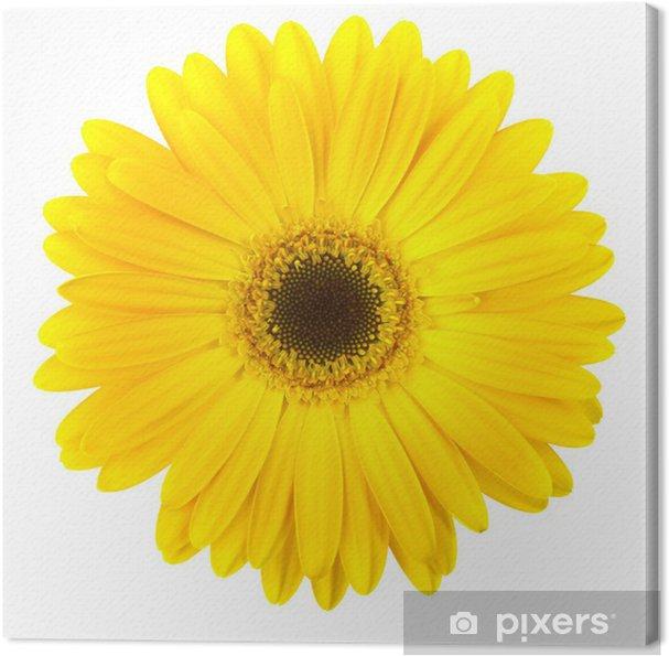 Tableau marguerite jaune 4 tableaux sur toile fleur marguerite jaune isole sur blanc