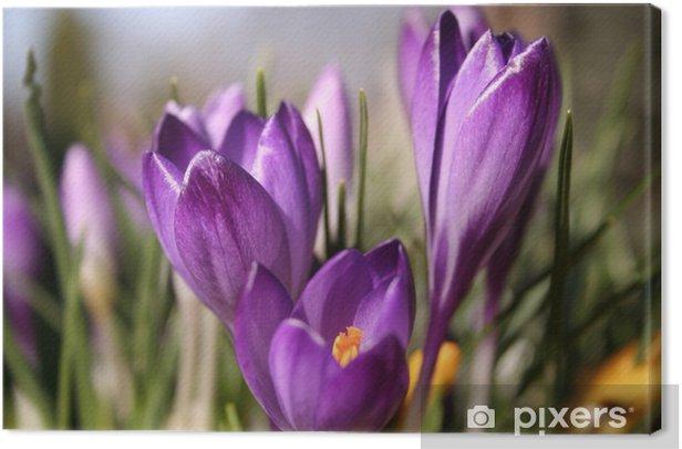 Tableau sur toile Fleur violette - Fleurs