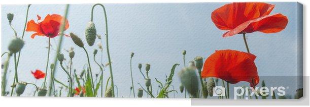 Tableau sur toile Fleurs - Coquelicots - Thèmes
