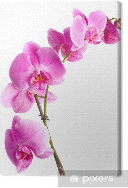 Tableau Sur Toile Fleurs D Orchidee Rose Sur Un Fond Blanc Pixers