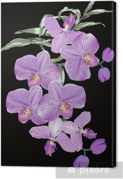 Tableau sur toile Fleurs d'orchidées lilas sur fond noir - Fleurs