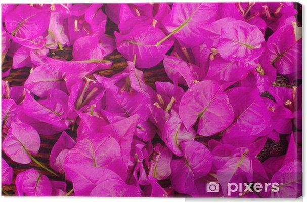 Tableau sur toile Fleurs de bougainvilliers - Arrière plans