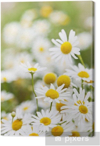 Tableau camomille 1 tableaux sur toile fleurs de camomille