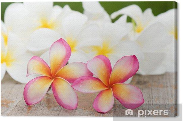 Tableau sur toile Fleurs de frangipanier - Fleurs