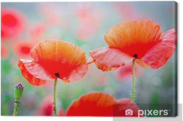 Tableau sur toile Fleurs de pavot fleur sur le pré - Fleurs