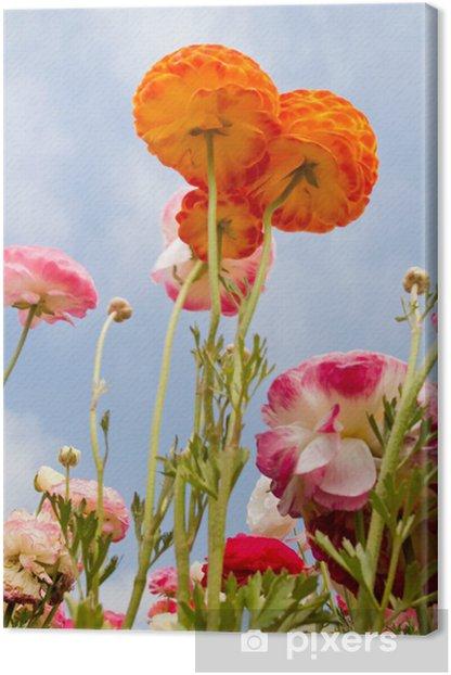 Tableau sur toile Fleurs de renoncules asiatiques - Fleurs