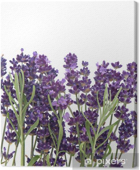 Tableau sur toile Fleurs et les feuilles de lavande fraîche - Fleurs
