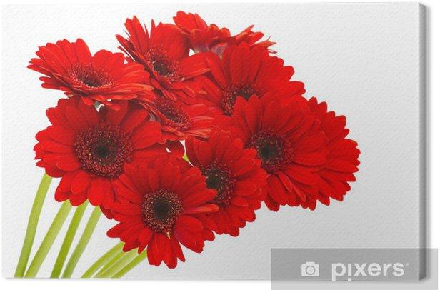 Tableau sur toile Fleurs Gerbera - Fleurs