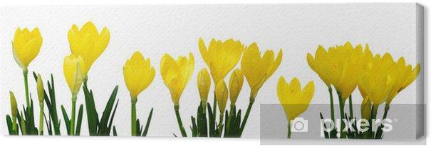 Tableau sur toile Fleurs jaunes de crocus - Fleurs