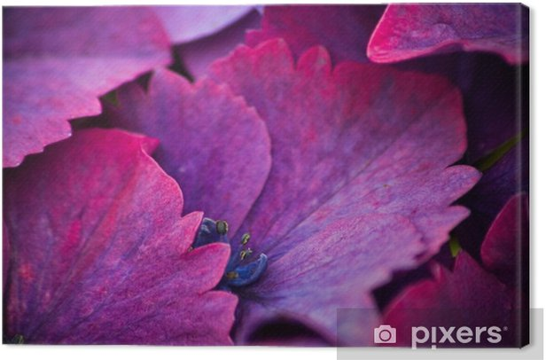 Tableau sur toile Fleurs mauve - Plantes et fleurs