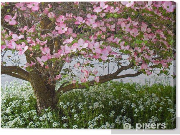 Tableau sur toile Fleurs roses ornent un arbre Cornouiller au printemps - Arbres