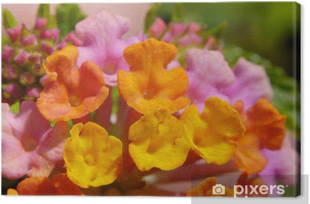 Tableau sur toile Fleurs sauvages hawaïennes, photo macro - Fleurs