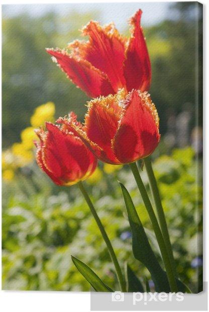 Tableau sur toile Fleurs Tulipe rouge - Fleurs