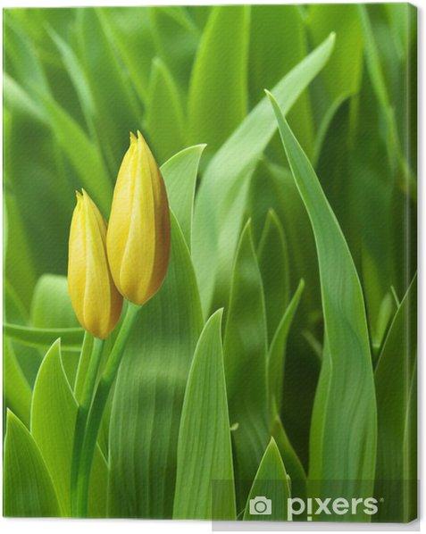 Tableau sur toile Fleurs tulipes pétales jaunes - Fleurs