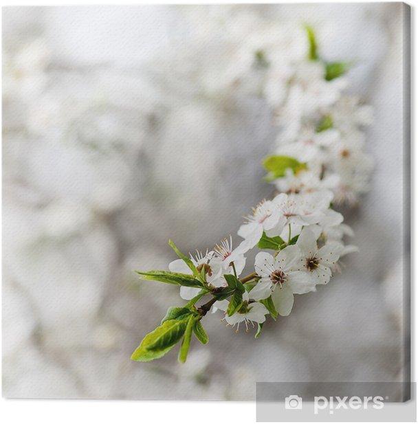 Tableau sur toile Floraison de cerise - Saisons