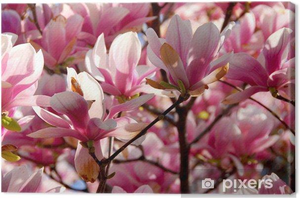 Tableau sur toile Floraison magnolia - Thèmes