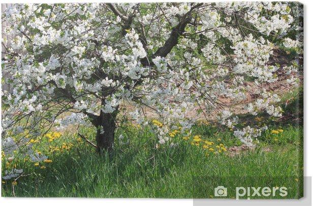 Tableau sur toile Floraison pommier - Saisons