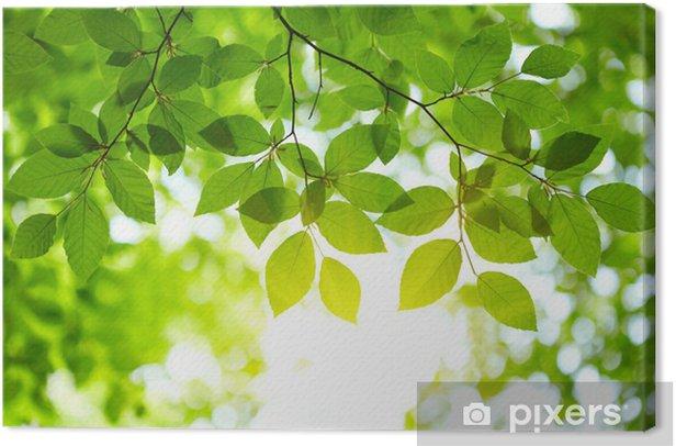 Tableau sur toile Fond de feuilles vertes - iStaging