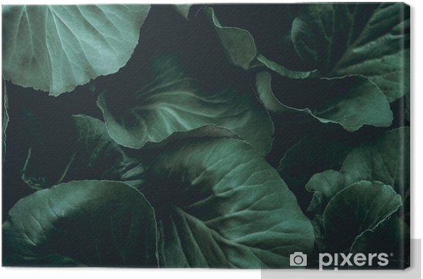 Tableau sur toile Fond de plante - Ressources graphiques