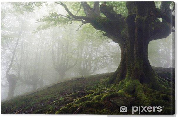 Tableau sur toile Forêt brumeuse avec des arbres mystérieuses racines tordues - Thèmes