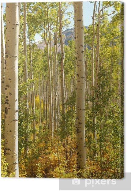 Tableau sur toile Forêt d'Aspen Trees - Saisons