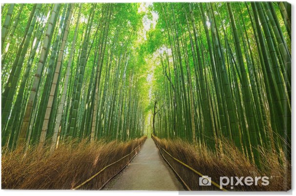 Tableau sur toile Forêt de bambou arashiyama au kyoto au japon - Voyages