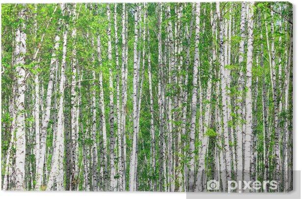 Tableau sur toile Forêt de bouleaux. Mai - Styles