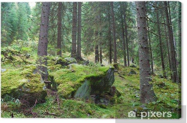 Tableau sur toile Forêt de conifères - Forêt